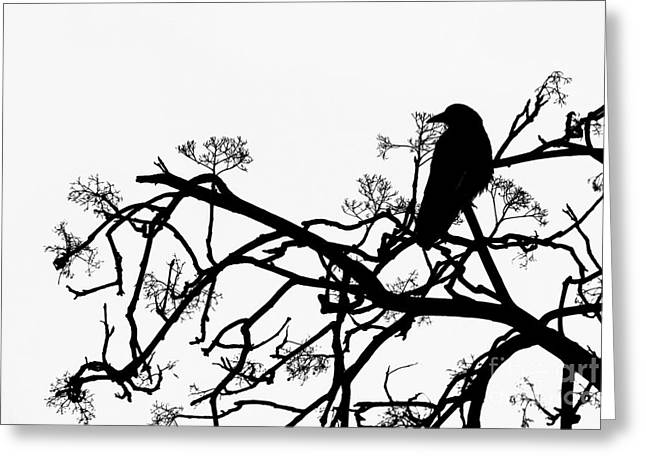Sillouette Greeting Cards - Crow Greeting Card by Jasna Buncic