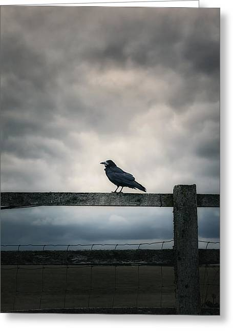 Rook Greeting Cards - Crow Greeting Card by Joana Kruse