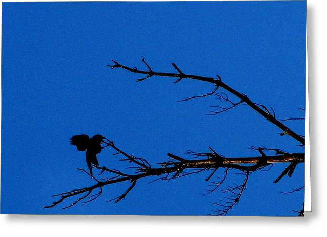 Angel Blues Greeting Cards - Crow Greeting Card by Mike Breau