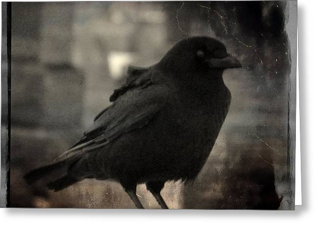 Crow Image Greeting Cards - Crow Portrait Greeting Card by Gothicolors Donna Snyder