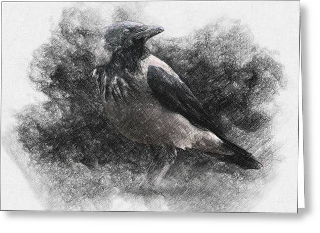 Amazing Drawings Greeting Cards - Crow Greeting Card by Taylan Soyturk