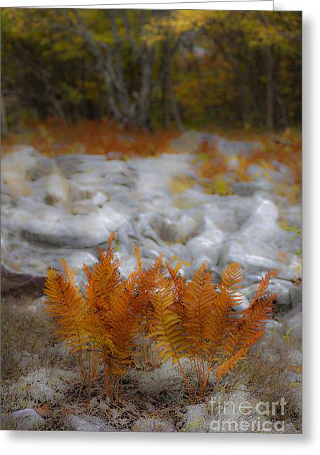 Paint Photograph Greeting Cards - Crown of Ferns - Autumn in Dolly Sods Greeting Card by Dan Carmichael