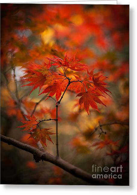 Acer Greeting Cards - Crown of Fire Greeting Card by Mike Reid