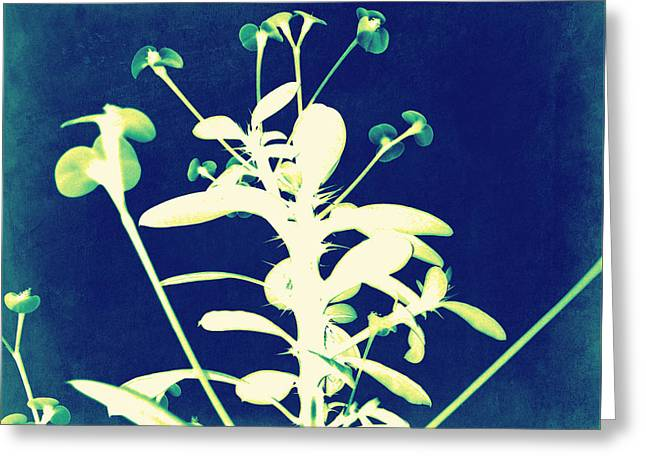Crown of Thorns - Blue Greeting Card by Shawna  Rowe