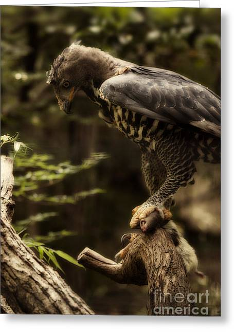Eagle Greeting Cards - Crowned Eagle V3 Greeting Card by Douglas Barnard