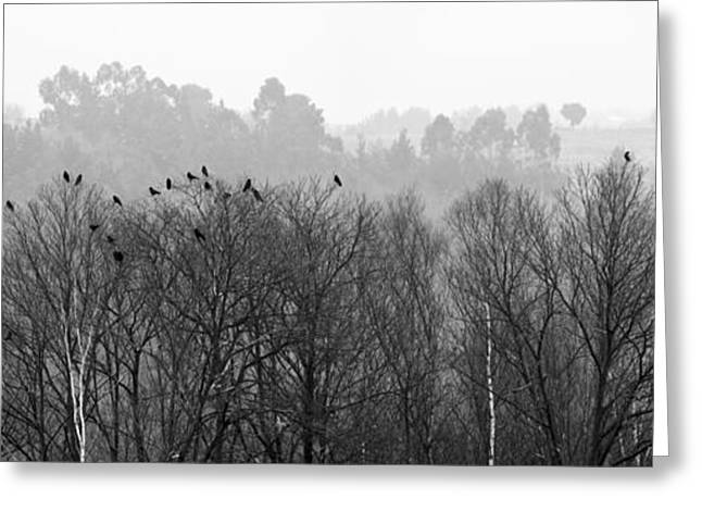 Large Format Animal Print Greeting Cards - Crows Greeting Card by Adolfo Fernandez
