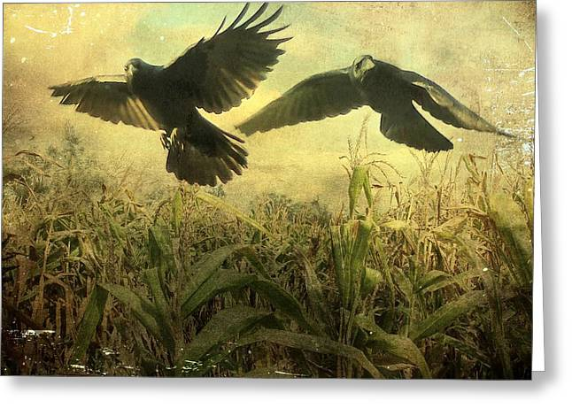 Cornfield Digital Art Greeting Cards - Crows Of The Corn 2 Greeting Card by Gothicolors Donna Snyder