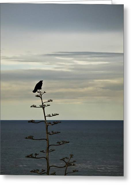 Crows Framed Prints Greeting Cards - Crows View Greeting Card by Joseph Hollingsworth