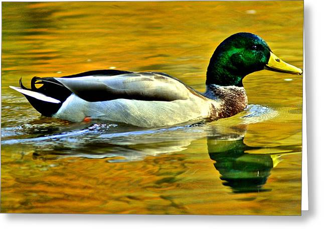 Cruisin Greeting Card by Frozen in Time Fine Art Photography