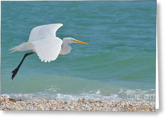 Susan Smith Greeting Cards - Cruising the Shore Greeting Card by Susan Smith
