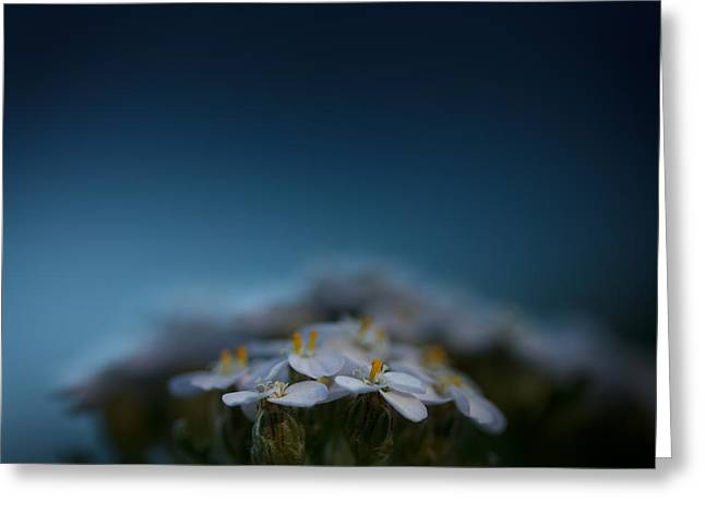 Blue Flowers Photographs Greeting Cards - Crushed by the Weight of Blue Greeting Card by Shane Holsclaw