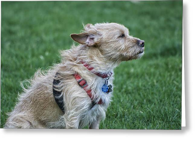 Photography By Tom Woolworth Greeting Cards - Cruz Enjoying a Warm Gentle Breeze Greeting Card by Thomas Woolworth