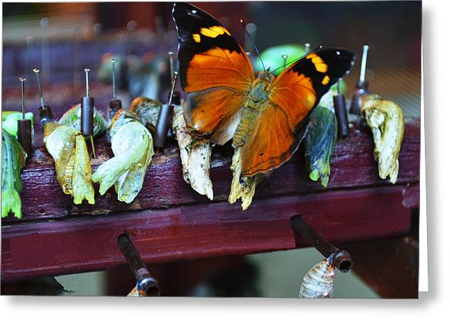 Cocoon Greeting Cards - Crysalis Greeting Card by Sheila OBrian