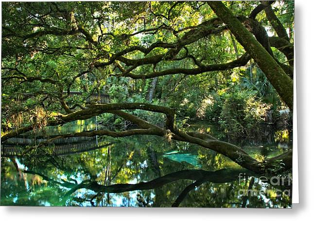 Oak Hammocks Greeting Cards - Crystal Clear Fern Hammock Waters Greeting Card by Adam Jewell