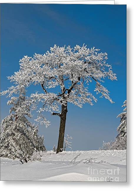 Snowy Field Greeting Cards - Crystal Clear Greeting Card by Lois Bryan