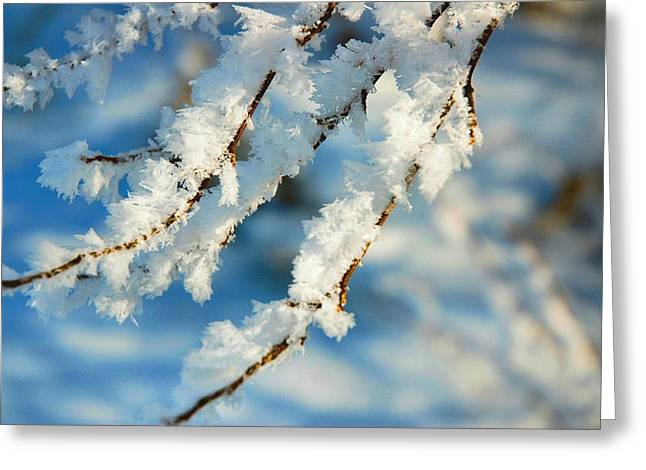 Brrrr Greeting Cards - Crystal Cool Greeting Card by Scott Nicol