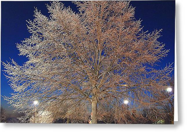 Crystal Tree Greeting Card by Frozen in Time Fine Art Photography