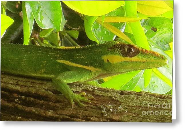 Sort Out Greeting Cards - Cuban Knight Anole Lizard Greeting Card by Robert Birkenes