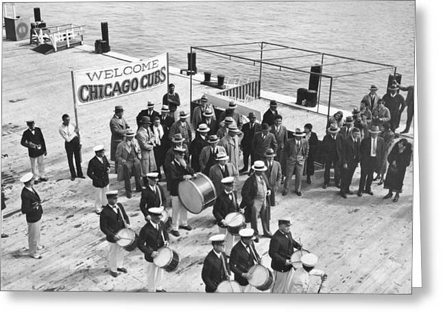Cubs Arrive At Catalina Island Greeting Card by Underwood Archives