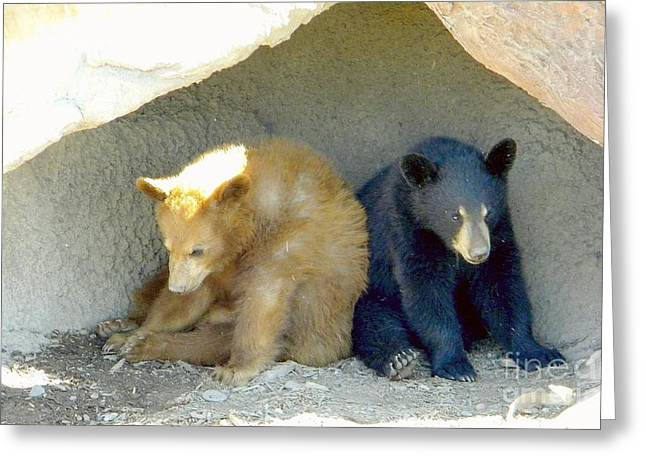 Naturalistic Greeting Cards - Cubs in a Pod Greeting Card by Kim Petitt