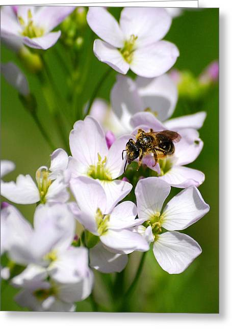 Cuckoo Flowers Greeting Card by Christina Rollo