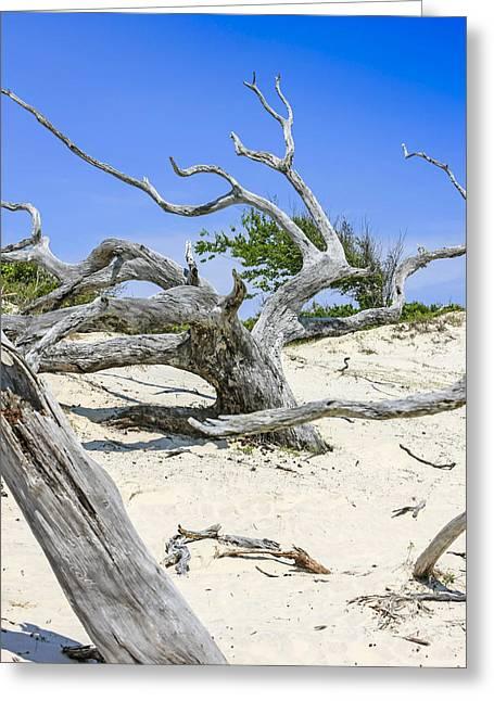 Crooked Island Dunes Greeting Cards - Cumberland Dunes Greeting Card by Chris Smith