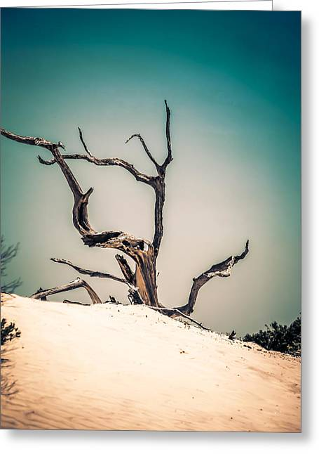 Crooked Island Dunes Greeting Cards - Cumberland Island Greeting Card by Chris Smith