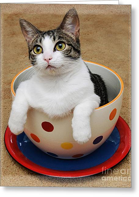 Tilly Greeting Cards - Cup O Tilly 1 Greeting Card by Andee Design