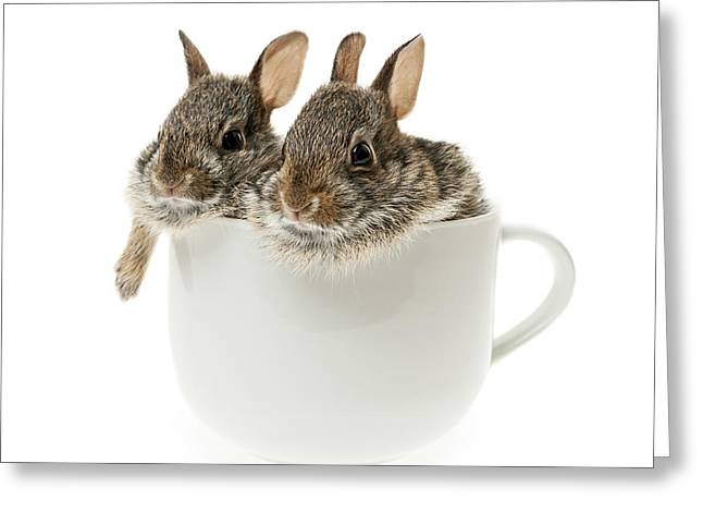 Hare Greeting Cards - Cup of bunnies Greeting Card by Elena Elisseeva