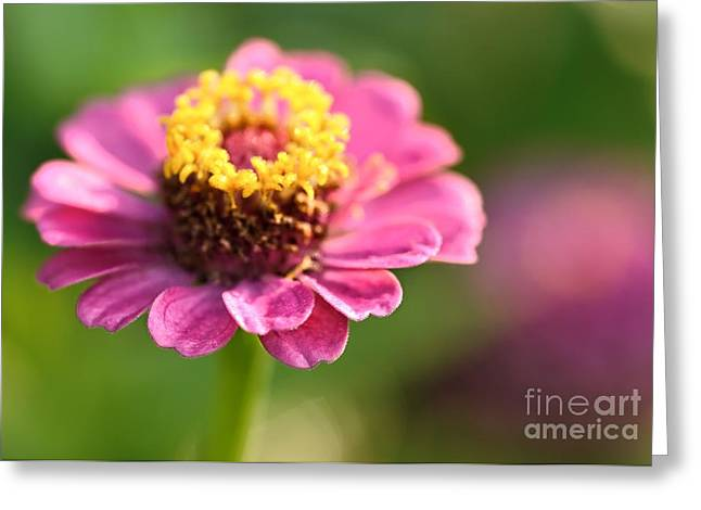 Zinnia Elegans Greeting Cards - Cupcake on a Plate Greeting Card by Chris Fleming