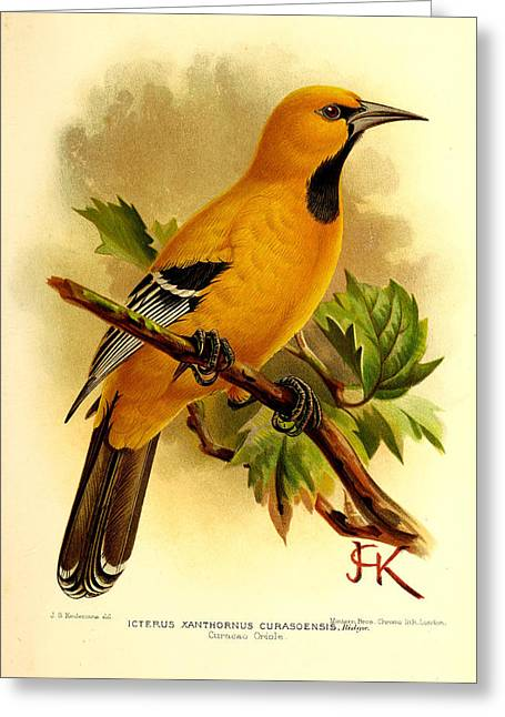 Oriole Greeting Cards - Curacao Oriole Greeting Card by J G Keulemans