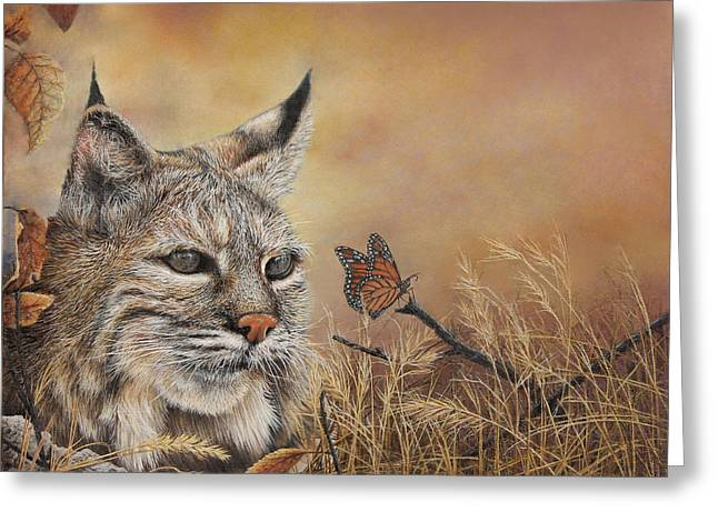 Bobcat Greeting Cards - Curiosity Greeting Card by Earl Olson
