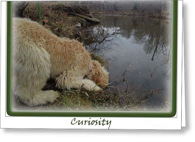 Puppies Digital Greeting Cards - Curiosity of a Puppy Greeting Card by Sandra Clark