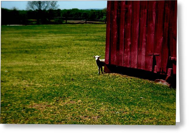 Connecticut Farms Greeting Cards - Curious  Greeting Card by Andrea Galiffi
