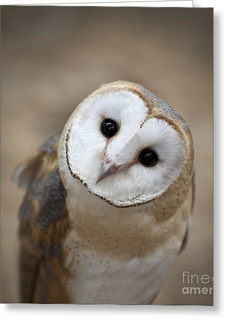 Cute Owl Greeting Cards - Curious Barn Owl Closeup Portrait Greeting Card by Brandon Alms