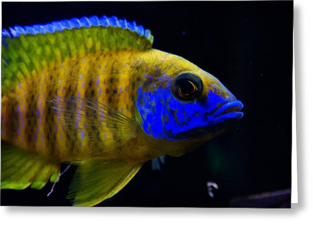 Decorative Fish Greeting Cards - Curious blue Greeting Card by Celestial Images