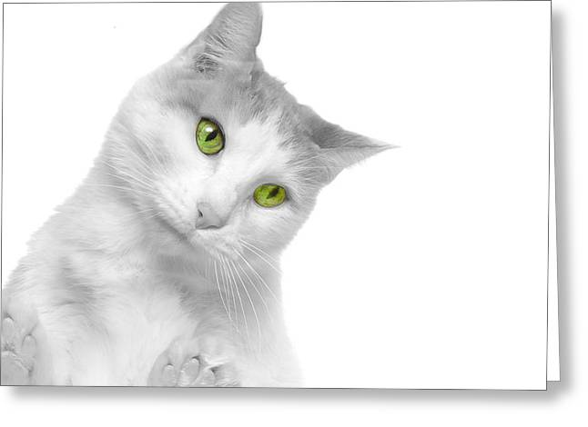 Cute Kitten Greeting Cards - Curious cat 2 Greeting Card by Jim Hughes