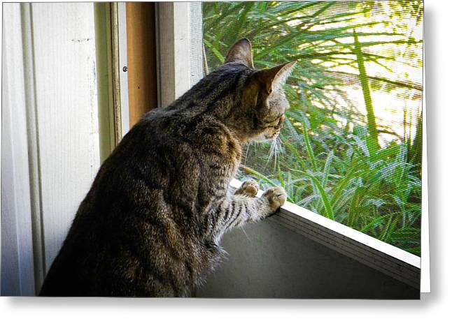 Screen Doors Greeting Cards - Curious Cat Greeting Card by Christy Usilton