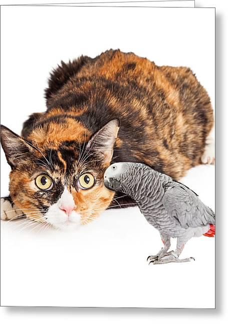African Cats Greeting Cards - Curious Cat Looking At Bird Greeting Card by Susan  Schmitz