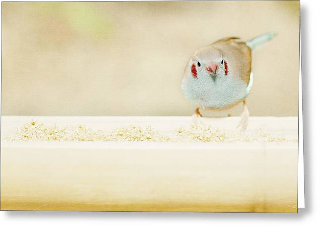 Cordoned Greeting Cards - Curious Cordon Bleu Finch  Greeting Card by Lisa Knechtel