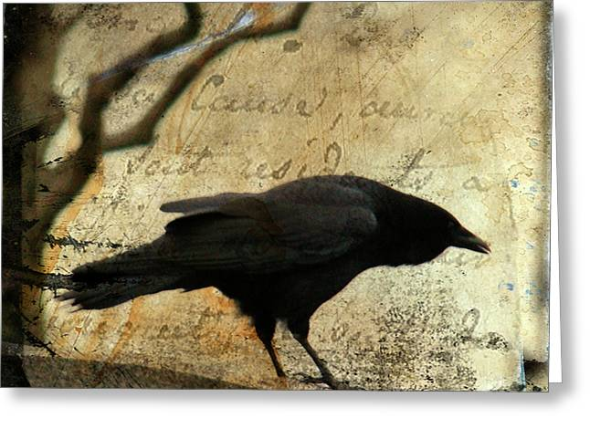 Words Background Greeting Cards - Curious Crow Greeting Card by Gothicolors Donna Snyder