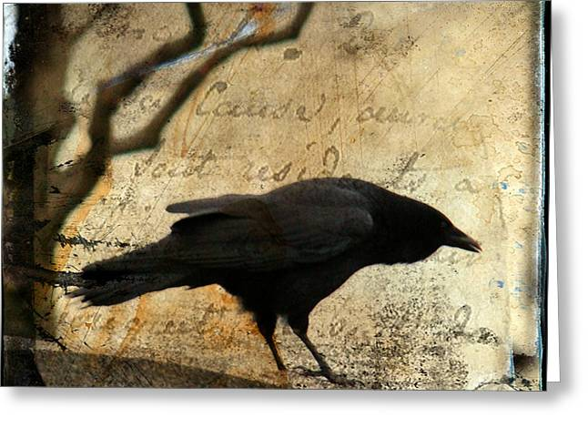 Crow Collage Greeting Cards - Curious Crow Greeting Card by Gothicolors Donna Snyder