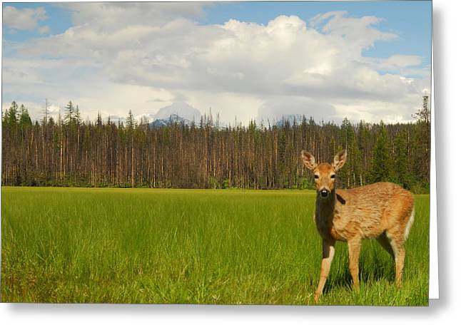 Curious Deer In Glacier National Park Greeting Card by Larry Moloney