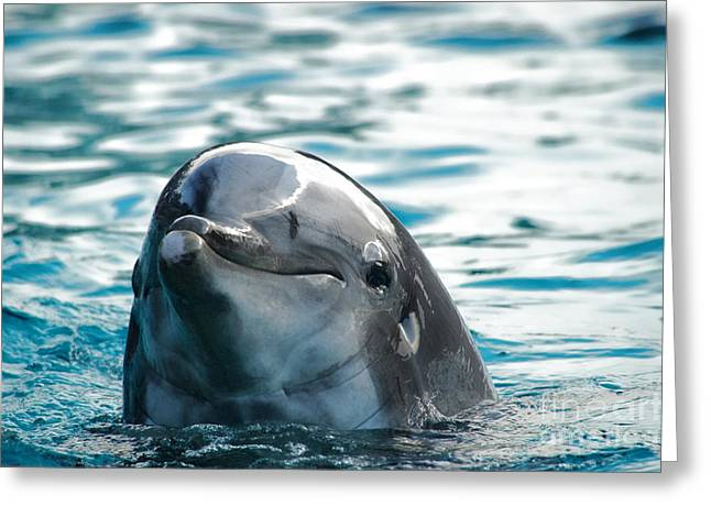 Clemente Greeting Cards - Curious dolphin Greeting Card by Mariola Bitner