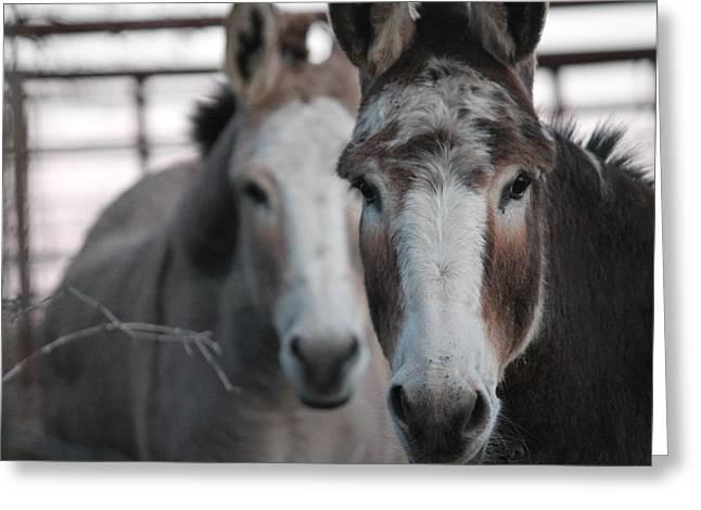 Curious Donkeys Greeting Card by Lorri Crossno