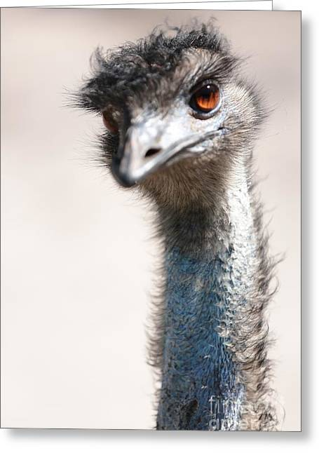 Emu Greeting Cards - Curious Emu Greeting Card by Carol Groenen
