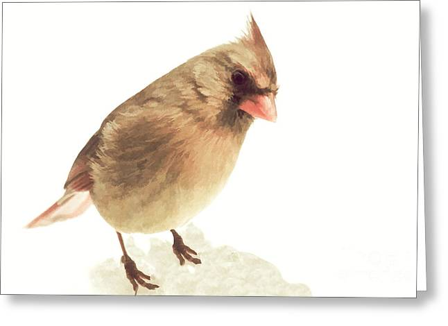 Cardinals In Snow Greeting Cards - Curious Female Cardinal II Greeting Card by Heidi Piccerelli