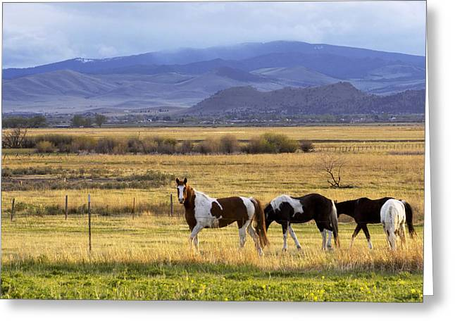 Moyers Greeting Cards - Curious Horses by lake Helena Greeting Card by Dana Moyer