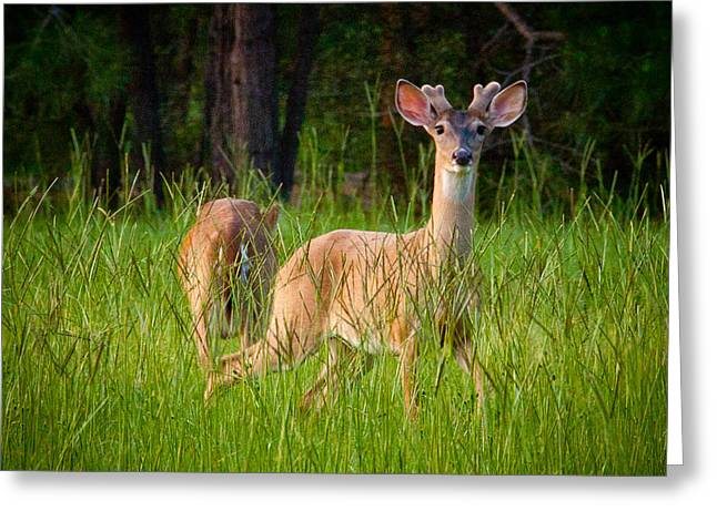 Full Body Digital Art Greeting Cards - Curious Greeting Card by Linda Unger