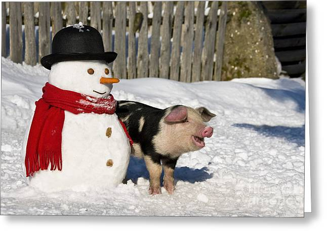 Piglets Greeting Cards - Curious Piglet And Snowman Greeting Card by Jean-Louis Klein and Marie-Luce Hubert